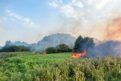 Forest wildfire. Burning field of dry grass and trees. Heavy smoke against blue sky. Wild fire due to hot windy weather. In summer royalty free stock photos