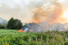 Forest wildfire. Burning field of dry grass and trees. Heavy smoke against blue sky. Wild fire due to hot windy weather. In summer stock photo