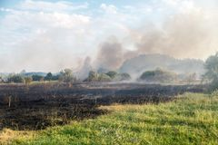 Forest wildfire. Burning field of dry grass and trees. Heavy smoke against blue sky. Wild fire due to hot windy weather in summer.  royalty free stock photo