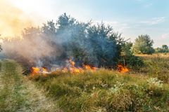 Forest wildfire. Burning field of dry grass and trees. Heavy smoke against blue sky. Wild fire due to hot windy weather in summer. Road to escape from disaster stock photography