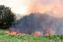 Forest wildfire. Burning field of dry grass and trees. Heavy smoke against blue sky. Wild fire due to hot windy weather in summer.  royalty free stock photos
