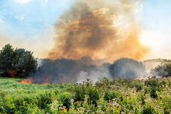 Forest wildfire. Burning field of dry grass and trees. Heavy smoke against blue sky. Wild fire due to hot windy weather in summer.  stock images