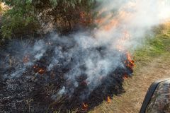 Forest wildfire. Burning field of dry grass and trees. Heavy smoke against blue sky. Wild fire due to hot windy weather. In summer. rescuer inspecting disaster stock photography