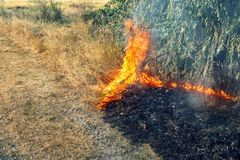Forest wildfire. Burning field of dry grass and trees. Heavy smoke against blue sky. Wild fire due to hot windy weather in summer.  royalty free stock photography
