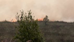 Forest wildfire. Burning field of dry grass and trees. Heavy smoke against sky. Wild fire due to hot windy weather in summer. Forest in fire, burning trees stock video