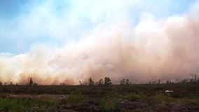 Forest wildfire. Burning field of dry grass and trees. Heavy smoke against sky. Wild fire due to hot windy weather in summer. Forest in fire, burning trees stock footage