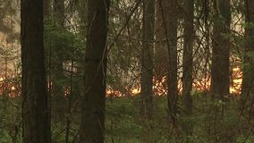 Forest wildfire. Burning field of dry grass and trees. Heavy smoke against sky. Wild fire due to hot windy weather in summer. stock footage