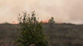 Forest Wildfire Campo ardente da grama seca e das árvores Fumo pesado contra o céu Fogo selvagem devido ao tempo ventoso quente n video estoque