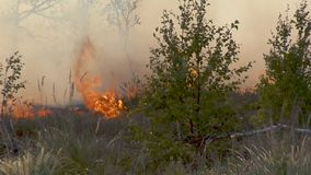 Forest Wildfire Campo ardente da grama seca e das árvores Fumo pesado contra o céu Fogo selvagem devido ao tempo ventoso quente n vídeos de arquivo