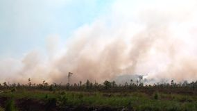 Forest Wildfire Campo ardente da grama seca e das árvores Fumo pesado contra o céu Fogo selvagem devido ao tempo ventoso quente n filme