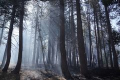 Forest wildfire Stock Photography