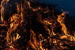 Forest wildfire at night whole area covered by flame and clouds of dark smoke. Distorted details due high temperature and. Evaporation gases during combustion stock photography