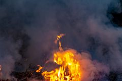Forest wildfire at night whole area covered by flame and clouds of dark smoke. Distorted details due high temperature and stock images