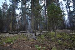 Forest wildfire royalty free stock photography