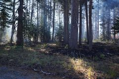 Forest wildfire royalty free stock images