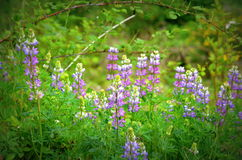 Forest Wildflowers Immagini Stock