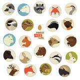 Forest Wildlife Animals Round-kaders vector illustratie