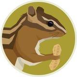 Forest Wildlife Vector-het kaderaardeekhoorn van dierenrounde met pinda royalty-vrije illustratie