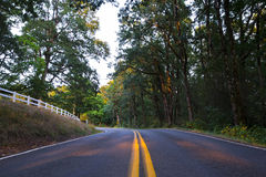 Forest winding road surrounded by wildlife Stock Photography