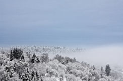 Forest in Winter. This image shows a wintry forest with a big cloud stock images