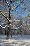 Forest in winter. Snow covered tree in winter forest Stock Photos