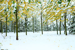 Forest in the winter Stock Photos
