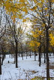 Forest in the winter Stock Photography