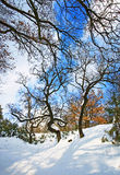 Forest in winter royalty free stock images