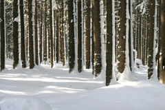 Forest in winter. With trees covered by snow Stock Images