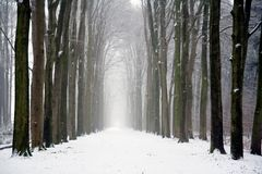 Forest winter. Forest on a cloudy winter day Stock Photography
