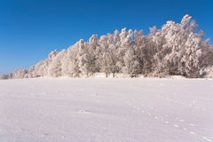 Forest in winter. View of the forest with frost on the trees Royalty Free Stock Photo