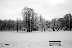 Forest winter. Lonely bench in forest winter Royalty Free Stock Images