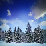Forest in the winter Royalty Free Stock Image