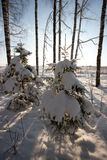 Forest in winter Royalty Free Stock Photos