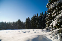 Forest in the winter 3 Royalty Free Stock Image