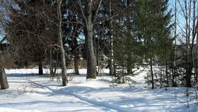 Forest winter Stock Image