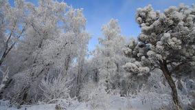 Forest In Winter metrajes