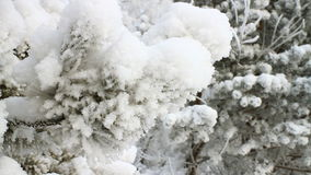 Forest In Winter almacen de metraje de vídeo