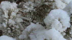 Forest In Winter almacen de video