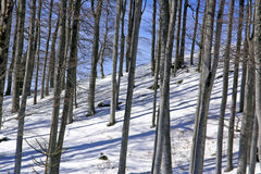 Forest winter. Forest in mountains - winter with snow Royalty Free Stock Image