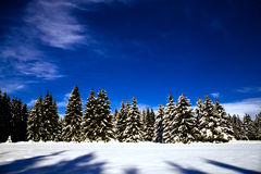 Forest in the winter Royalty Free Stock Photo