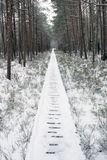 Forest of winter Stock Photos