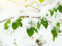 Forest in winter Stock Image