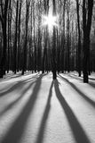 Forest at winter day Stock Images