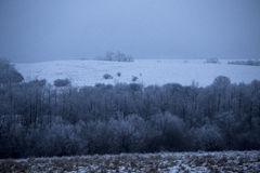 Forest winter. December,wood winter, rural farm Stock Images
