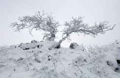 Forest in winter with fog and snow landscape royalty free stock images