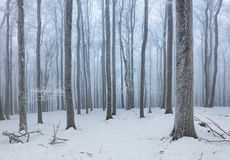 Forest in winter with fog and snow landscape Royalty Free Stock Photos