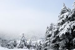 Forest and winter. Winter season Stock Photo