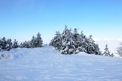 Forest and winter Stock Photo
