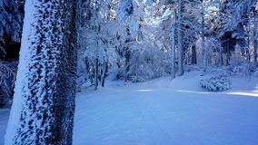 Forest in Winter. Forests in Winter are wonderfull stock photo
